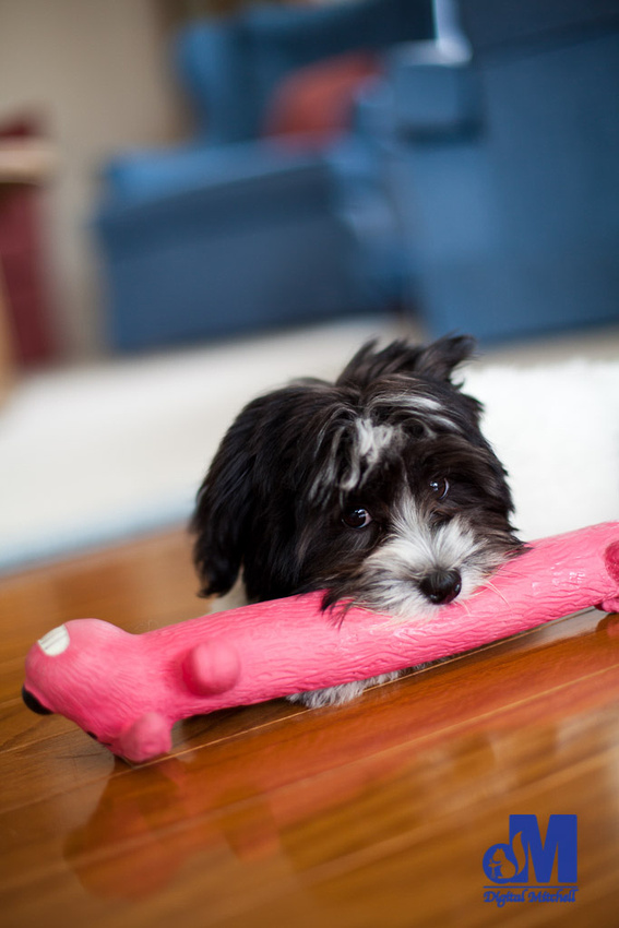 picture of a dog with a pink toy