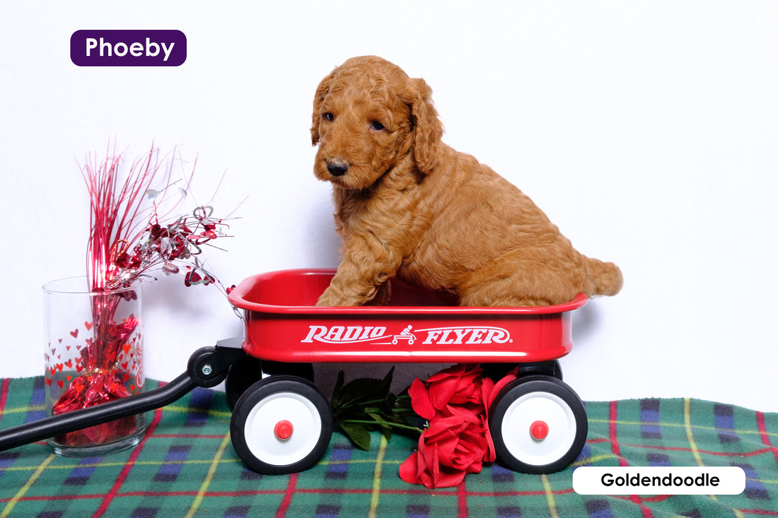 Image of a puppy sitting in a little red wagon