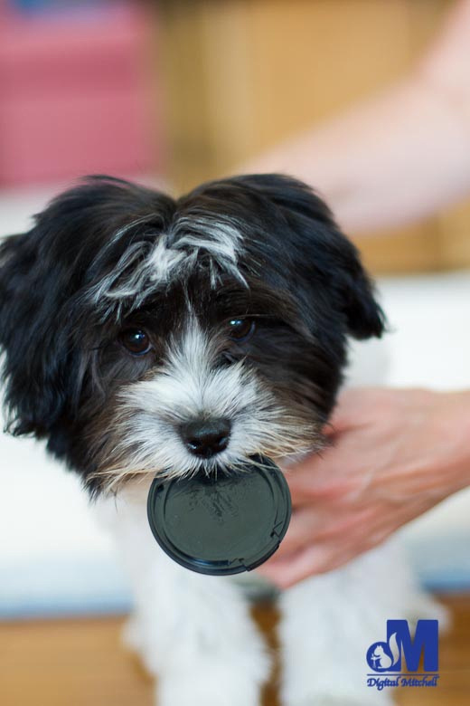 Picture of a dog with a camera lens cap