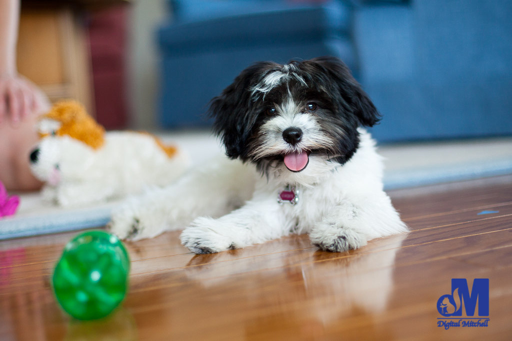 picture of a dog laying by toys