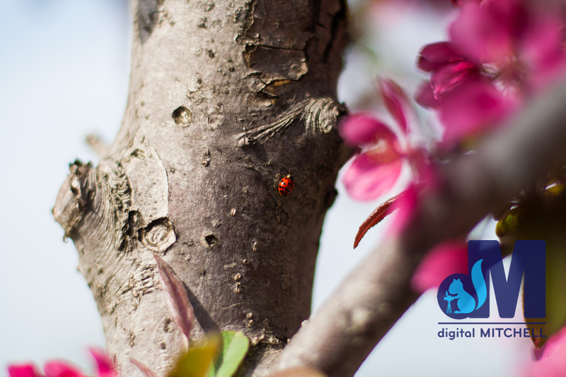 Photograph of ladybug on tree