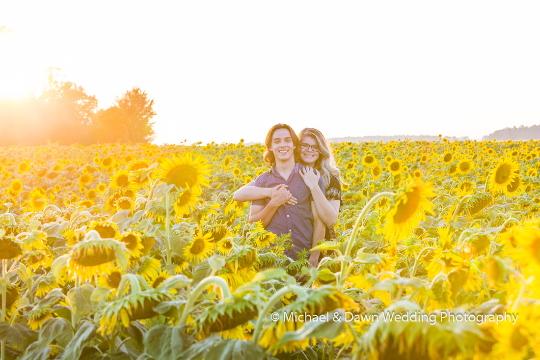 picture of engagement session in the sunflowers.