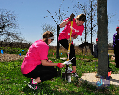 picture of tree planting with shovels at Elkhart Amazing Race 2014