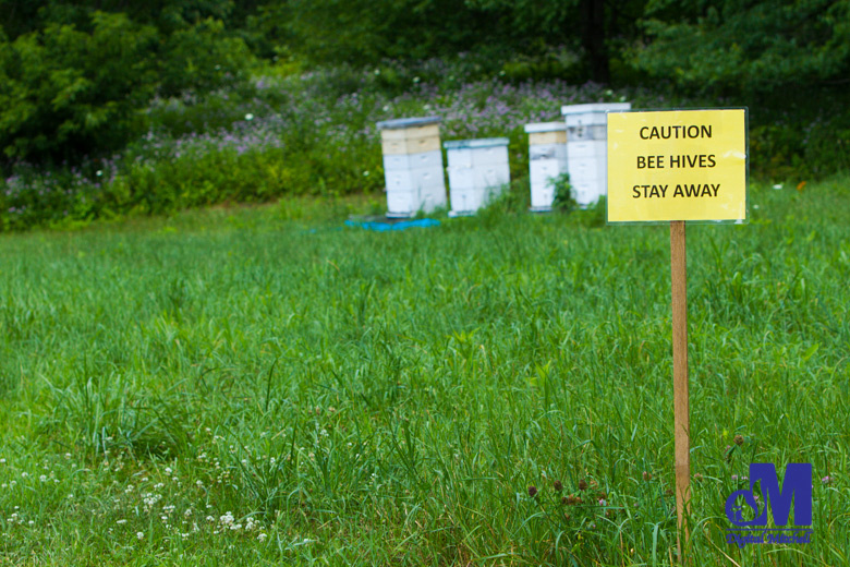 photograph of a honey bee hives